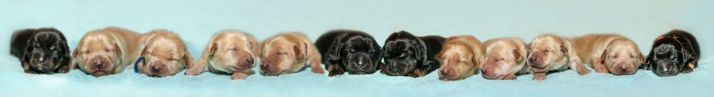 Unsere  Hundebabys